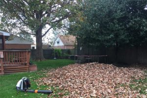fall and spring cleanup services